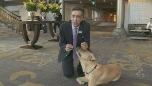 Welcome waggin': Failed guide dog becomes canine concierge
